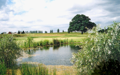 Welcome to North Weald Golf Club : North Weald Golf Club - CLUB View