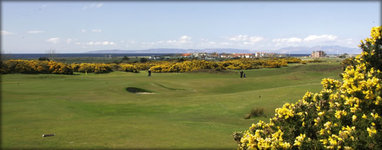 Ayr Golf Week